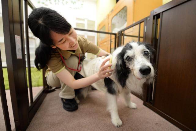 Une technicienne animale prend soin d'une femelle de... (Photo Toru YAMANAKA, AFP)
