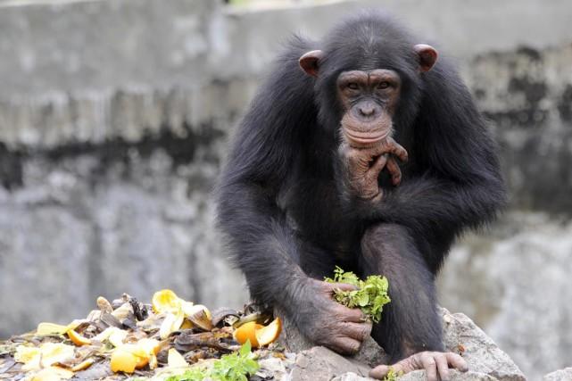 Après avoir analysé plus de 4500 gestes propres... (PHOTO SIA KAMBOU, ARCHIVES AFP)