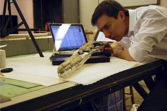 Daniel Ksepka, le curateur du musée Bruce deGreenwich... (PHOTO AP/BRUCE MUSEUM)
