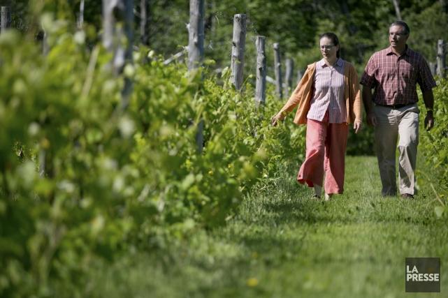 Le Québec deviendra-t-il un eldorado du mousseux? C'est le pari que font deux... (Photo David Boily, La Presse)
