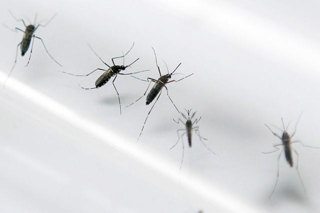 Le chikungunya, qui se propage notamment par l'entremise... (PHOTO PATRICE COPPEE, ARCHIVES AFP)