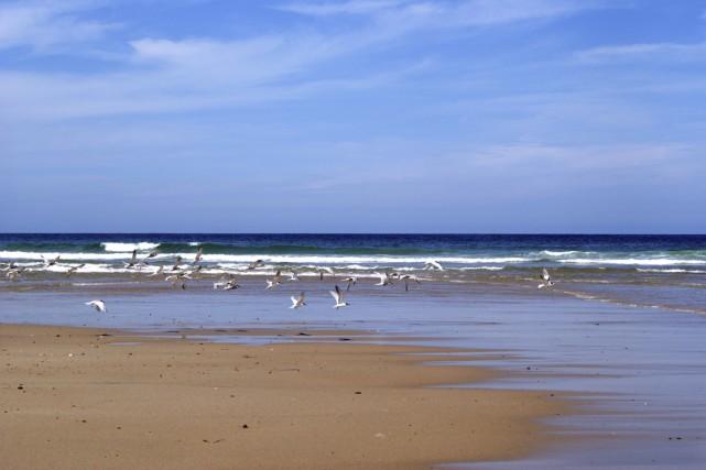 Depuis la mi-juin, six populaires plages de Cape Cod ont banni la cigarette des... (Photo Digital/Thinkstock)