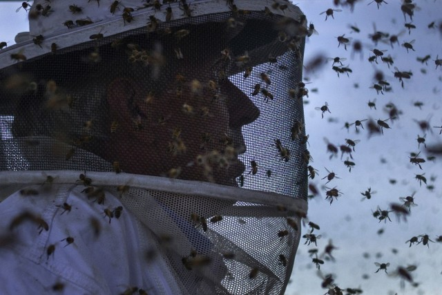 Par mauvais temps, les abeilles utilisent davantage les... (PHOTO ADREES LATIF, ARCHIVES REUTERS)