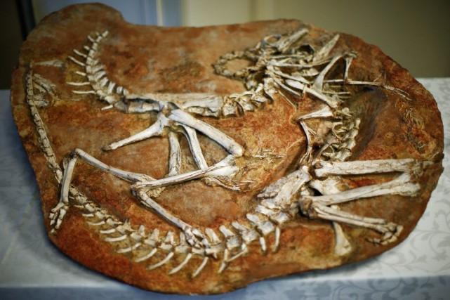 La prise comprend les squelettes de deux tyrannosaures... (Photo Reuters)