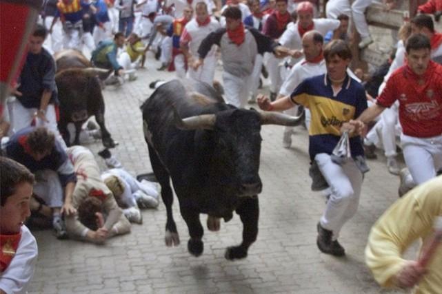 Les taureaux de combat d'une demi-tonne chacun ont... (Photo Santiago Lyon, AP)