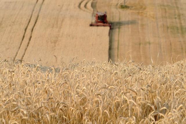 Les cours du blé se sont principalement repliés... (Photo REMY GABALDA, AFP)