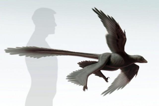 Vieux de 125 millions d'années, le reptile a... (Photo S. Abramowicz, Agence France-Presse)