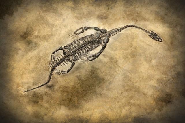 Fossiles de dinosaures, reptiles et autres «créatures d'exception» vieilles de... (Photo d'archives)