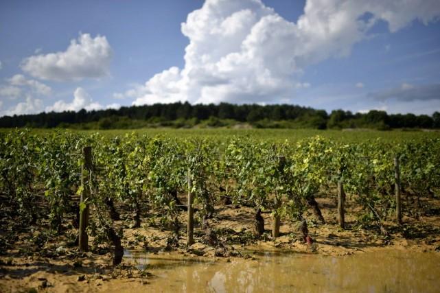En Languedoc-Roussillon, «l'ampleur des dégâts estimés est équivalente... (PHOTO JEFF PACHOUD, Archives AFP)