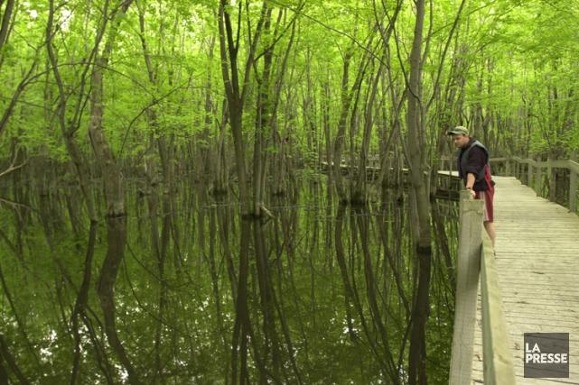 Parcs Canada affirme que les communautés d'arbres dépendantes... (Archives La Presse)