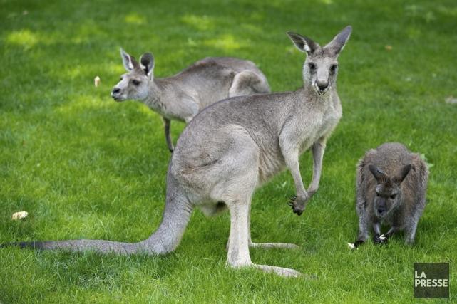 Zoo de Granby... (Photo François Roy, La Presse)