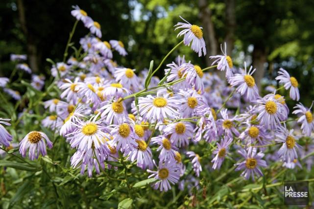 Chaque été, le jardin vit des périodes de sécheresse, cause de stress pour les... (Photo Archives La Presse)