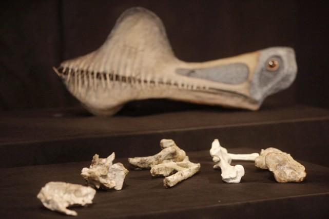 L'analyse de ces ossements fossilisés suggère que ces... (Photo: Reuters)