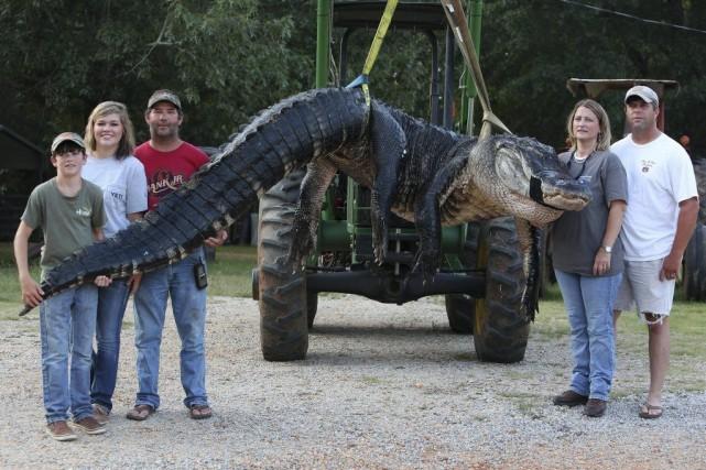 L'alligator est le plus gros à avoir été... (Photo Sharon Steinmann, AP)
