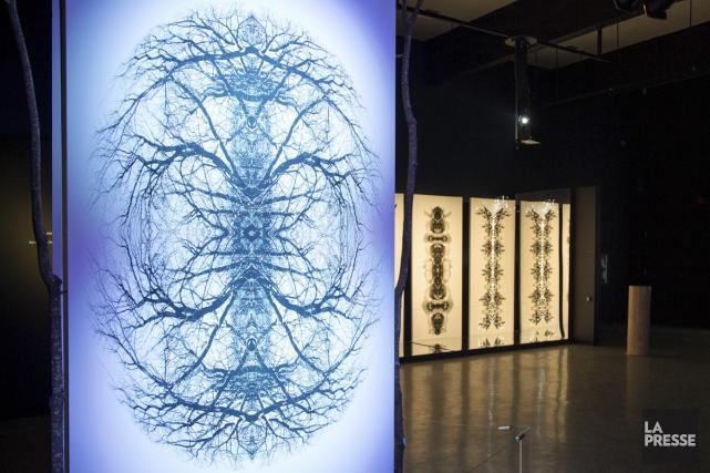 L'exposition Les esprits de l'arbre est notamment constituée... (Photo: Simon Giroux, La Presse)