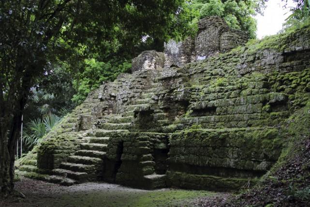 South America Tales [Mission JL-Batman, Flash, WW] 897558-vegetation-lutte-contre-ruines-tikal