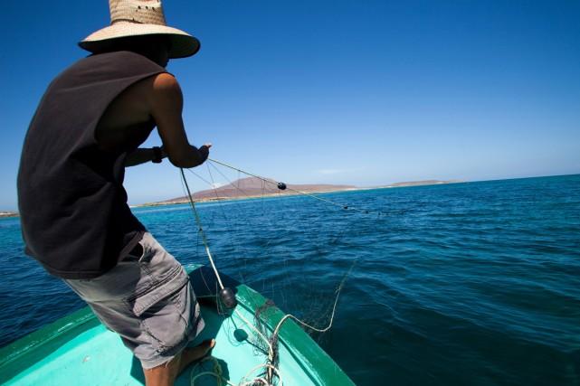 Au moins 48 tonnes de poissons morts ont été retirées ces derniers jours du lac... (Photo d'archives, PC)