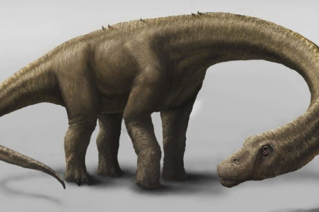 Une représentation du Dreadnoughtus schrani.... (PHOTO MARK A. KLINGER, AGENCE FRANCE-PRESSE)