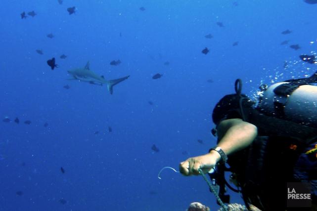 Dans l'archipel des Palaos, les adeptes de la... (Photo Valérie Simard, Archives La Presse)
