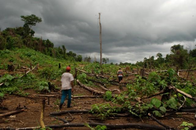 La diminution du nombre de forêts intactes a... (PHOTO SUTANTA ADITYA, AFP)