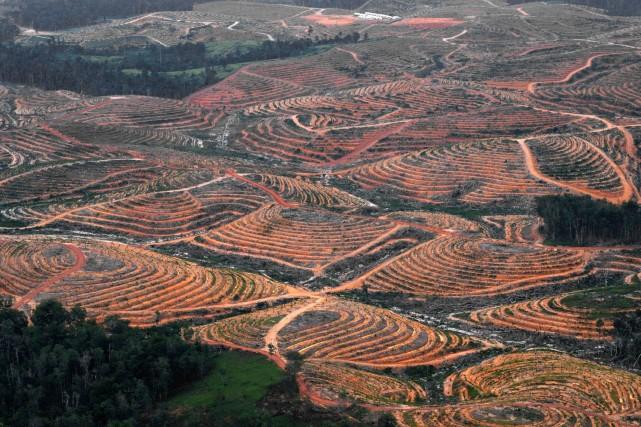 Vue aérienne sur une plantation de palmiers servant... (Photo archives AFP)