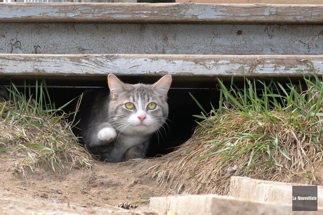 Une vétérinaire du Texas qui s'est vantée sur Facebook d'avoir tué un chat avec... (Photo Sylvain Mayer, archives Le Nouvelliste)