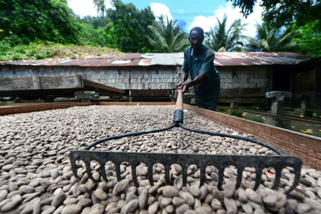 Ces deux dernières semaines, les cours du cacao... (Photo Frederic J. BROWN, AFP)