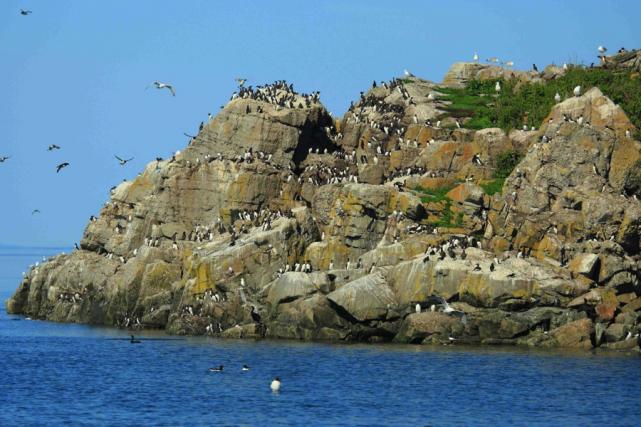 Colonie d'oiseaux marins sur les îles du Pot... (PHOTO FRANÇOIS GRAVEL, collaboration spéciale)