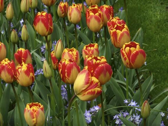 Bulbes tag s doublez la floraison larry hodgson horticulture - Bulbes a floraison automnale ...