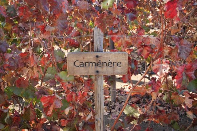 Jeune vin, le carménère doit encore conquérir ses... (Photo Digital/Thinkstock)
