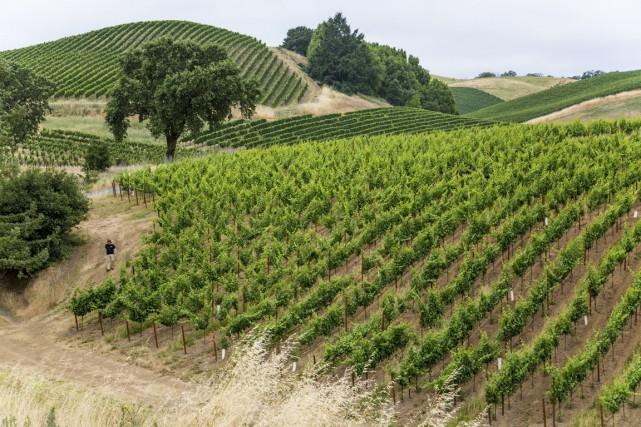 La région offre plusieurs vignobles qu'il est possible... (PHOTO FOURNIE PAR FAIRMONT)