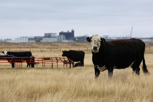Le ministre fédéral de l'Agriculture, Gerry Ritz, a annoncé jeudi une... (Photo archives Reuters)