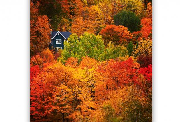 Quel plaisir d'admirer tous ces arbres colorés par l'automne! Les soumissions à... (@syl20mayer)