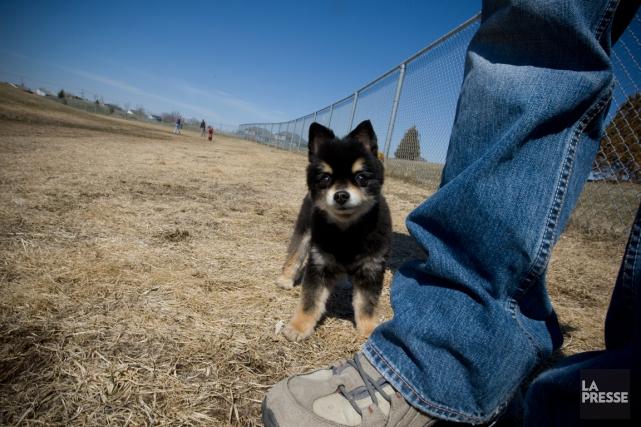 Nouvellement défriché et reverdi, le parc canin de la municipalité de Russell... (Archives, LA PRESSE)