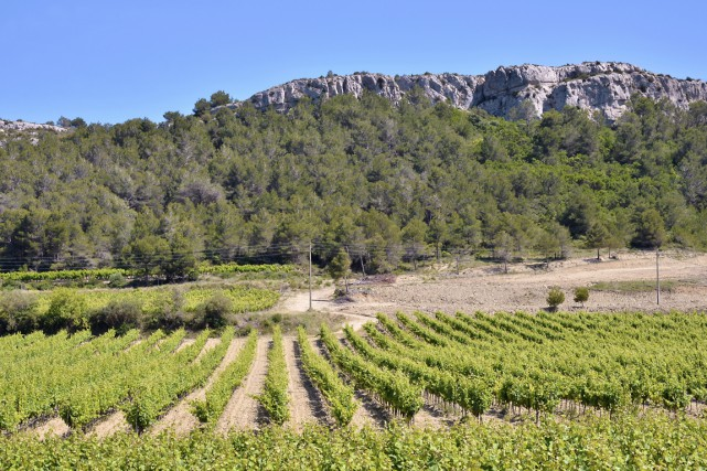 Un vignoble du Languedoc Roussillon.... (Photo Digital/Thinkstock)