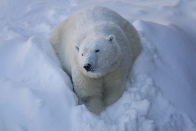 Les Inuits et les Cris ont accepté d'abaisser... (Photo MATHIEU BELANGER, ARCHIVES Reuters)