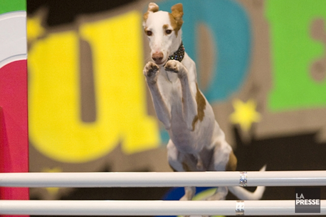 Les Superdogs, en spectacle au Centre Bell le... (PHOTO ARCHIVES LA PRESSE)