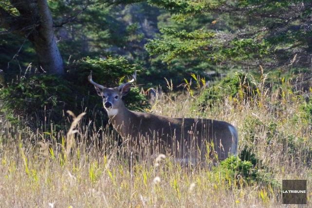 Les chasseurs peinent à se défaire de l'image de tueurs auprès de celles et... (Archives La Tribune)