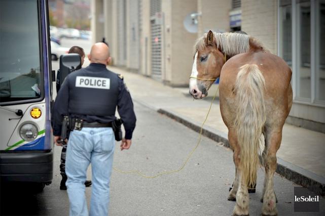 Le cheval s'est rendu jusqu'en basse ville de... (Photo Le Soleil, Pascal Ratthé)