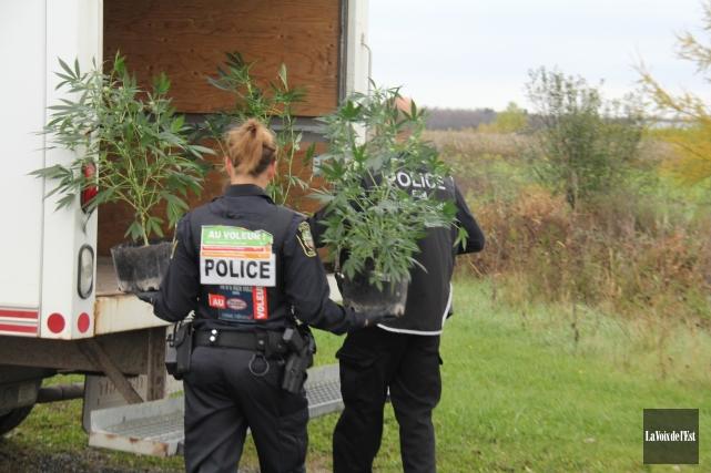 Les policiers de l'Escouade régionale mixte Granby ont démantelé une petite... (photo Janick Marois, La Voix de l'Est)