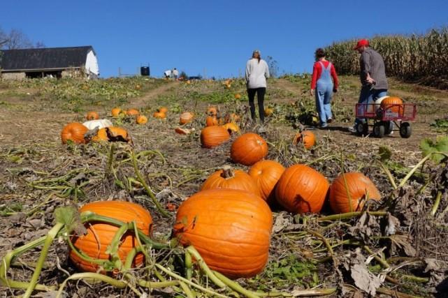 L'année dernière, les cultivateurs ont récolté 1,13 milliard... (Photo Robert MacPherson, AFP)