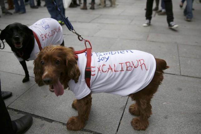 L'euthanasie d'Excalibur, le chien de l'aide-soignante espagnole atteinte... (Photo Andrea Comas, archives Reuters)