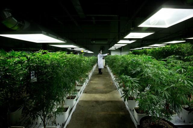 Le cannabis médical pourrait être vendu un jour... (Archives La Presse Canadienne)