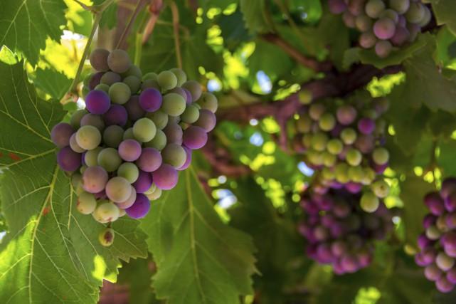 Les Côtes du Rhône sont le deuxième vignoble... (Photo Digital/Thinkstock)