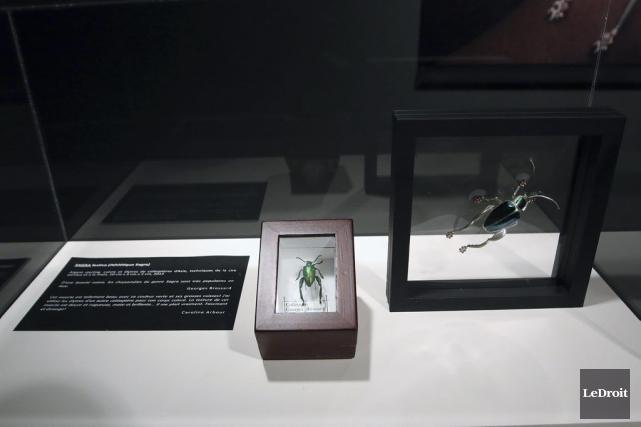 L'idée de marier art et entomologie ne date pas d'hier. Le Musée canadien de la... (Patrick Woodbury, LeDroit)