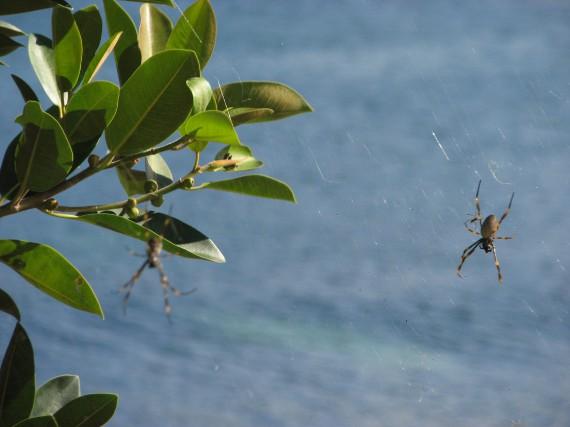 À défaut de savoir identifier les araignées dangereuses,... (La Nouvelle, Jonathan Custeau)