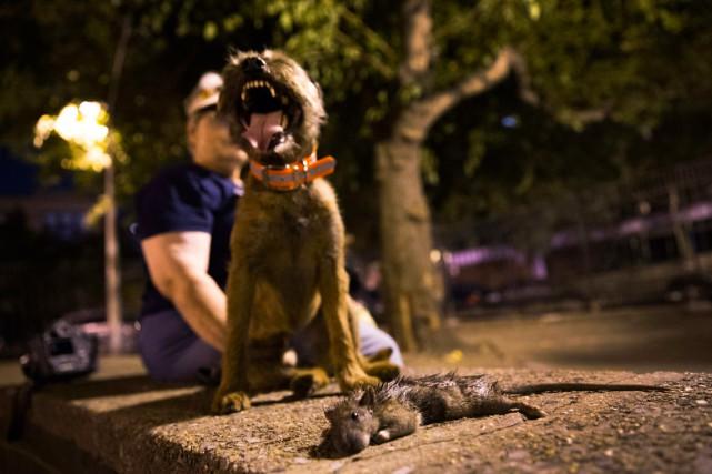 Un groupe formé de propriétaires de chiens terriers... (PHOTO MIKE SEGAR, REUTERS)