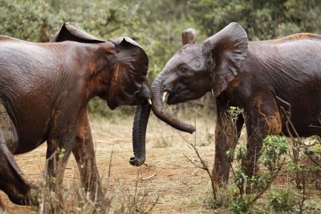 Les groupes de défense de l'environnement ne remettent... (Photo THOMAS MUKOYA, Reuters)