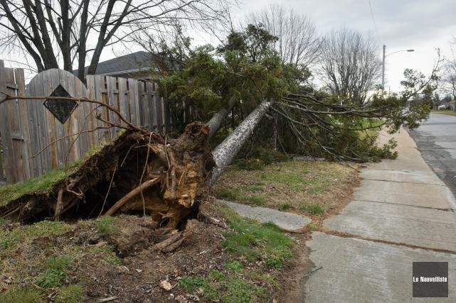 Un arbre a été arraché au coin des... (Photo: François Gervais Le Nouvelliste)