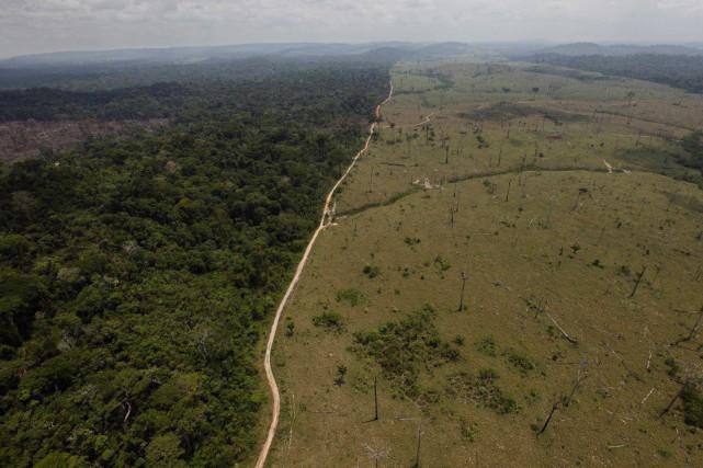 Afin de mieux lutter contre la déforestation, les... (Photo Andre Penner, Archives AP)